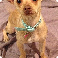 Adopt A Pet :: Lucy - Los Angeles, CA