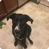 Adopt A Pet :: Solo - Broken Arrow, OK