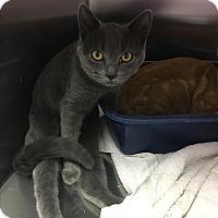 Adopt A Pet :: Piglet - Richboro, PA