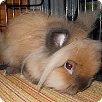Adopt A Pet :: Sonic - Hahira, GA