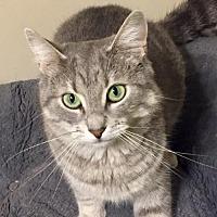 Adopt A Pet :: Alora - Walled Lake, MI
