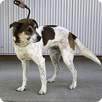 Adopt A Pet :: Bobby! - Sacramento, CA