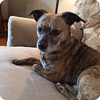 Adopt A Pet :: Tanner - Aurora, IL
