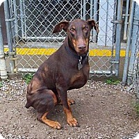 Adopt A Pet :: Chip--adopted! - New Richmond, OH