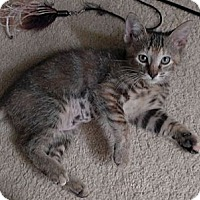 Adopt A Pet :: Maggie - Lighthouse Point, FL