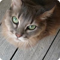 Adopt A Pet :: Sweet Pea - Crescent City, CA