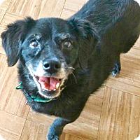 Adopt A Pet :: CHULA - Valley Village, CA