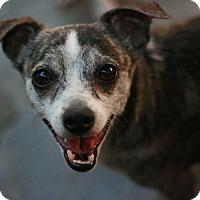 Adopt A Pet :: Peanut - Canoga Park, CA