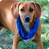 Adopt A Pet :: Aubrey in CT - Manchester, CT