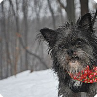 Adopt A Pet :: Toto - New Castle, PA