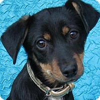 Adopt A Pet :: Nolan Voss - Cuba, NY