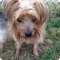Adopt A Pet :: Chowder - Pennington, NJ