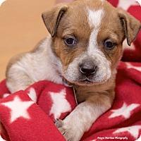 Adopt A Pet :: Muna - Homewood, AL