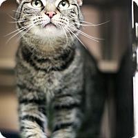 Adopt A Pet :: Gucci - Appleton, WI