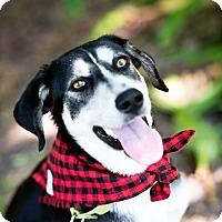 Adopt A Pet :: Rodney - Houston, TX