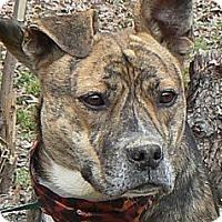 Adopt A Pet :: Glory - Centerville, TN