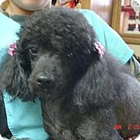 Adopt A Pet :: Zoey - Stilwell, OK