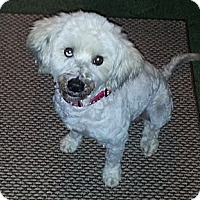 Adopt A Pet :: Mickey - Bowie, TX