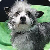 Adopt A Pet :: Hawk - Wytheville, VA