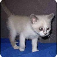 Adopt A Pet :: Everest - Modesto, CA