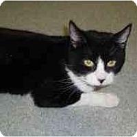 Adopt A Pet :: Missy Lou - Hamburg, NY