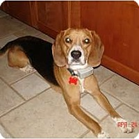 Adopt A Pet :: Buster - Indianapolis, IN