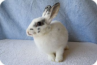 Other/Unknown Mix for adoption in Fountain Valley, California - Ted