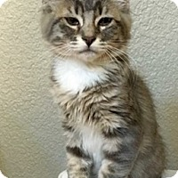 Adopt A Pet :: GCallen - North Highlands, CA