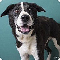 Adopt A Pet :: Quincy - Anniston, AL