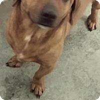 Adopt A Pet :: Bozo - Paducah, KY