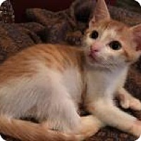 Adopt A Pet :: Melba - East Hanover, NJ