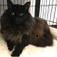 Adopt A Pet :: Ciner n Ella - Temple, PA