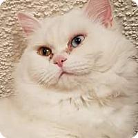 Adopt A Pet :: Sosi - Ennis, TX