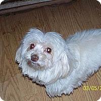 Adopt A Pet :: Pinky - Andrews, TX