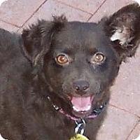 Adopt A Pet :: Coco - Tucson, AZ