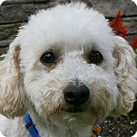 Adopt A Pet :: Garrett - Oceanside, CA