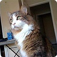Adopt A Pet :: *Nigel - Winder, GA