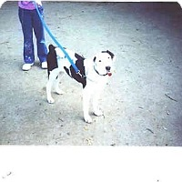 Adopt A Pet :: Charlie - Flint (Serving North and East TX), TX