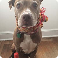 Adopt A Pet :: Princess - Wilmington, DE