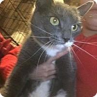 Adopt A Pet :: Hana - East Brunswick, NJ