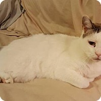 Adopt A Pet :: Cypress - Spring, TX