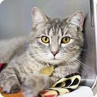 Domestic Mediumhair Cat for adoption in Mountain Home, Arkansas - Jewel