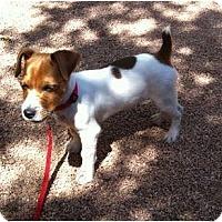 Adopt A Pet :: CONAN - Scottsdale, AZ