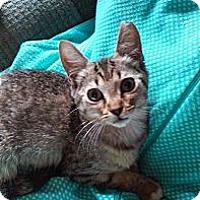 Adopt A Pet :: Lexi - Ft. Lauderdale, FL