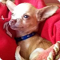 Adopt A Pet :: Bandito - Conyers, GA