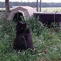 Adopt A Pet :: Mecca - Columbia, SC