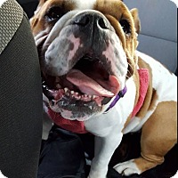 Adopt A Pet :: Izzy - Chicago, IL