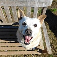 Retriever (Unknown Type)/Terrier (Unknown Type, Medium) Mix Dog for adoption in Little Elm, Texas - Daisy Mae