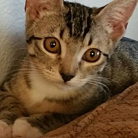 Adopt A Pet :: Dingy - Nuevo, CA