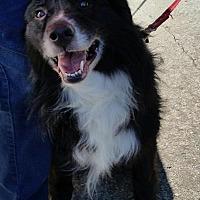 Adopt A Pet :: Gatsby - COLUMBUS, OH